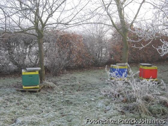 Bienenstand Dezember `07