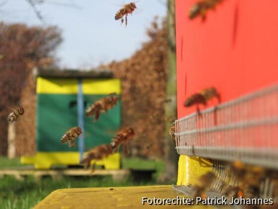 Fleissige Bienchen