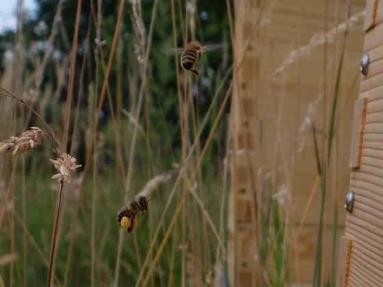 Pollenhöschen
