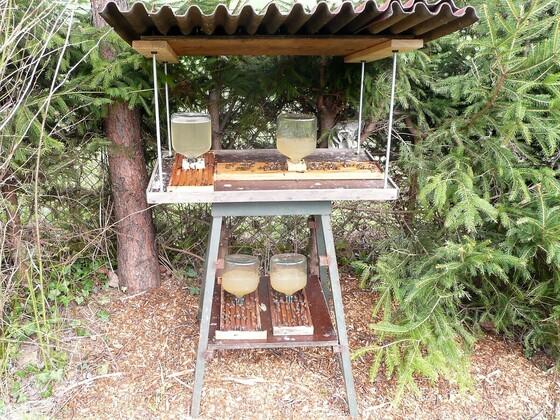 Meine alte Bienentränke, ist nicht mehr in Gebrauch