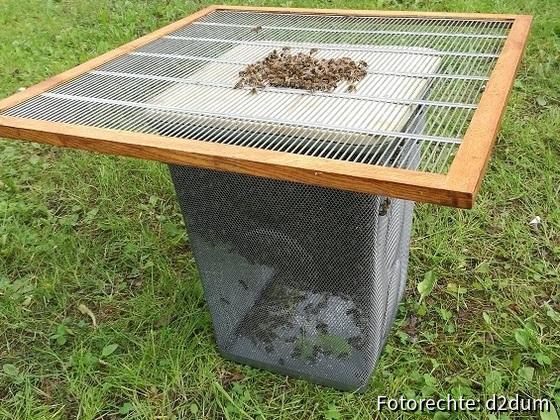 schwarmfang-2