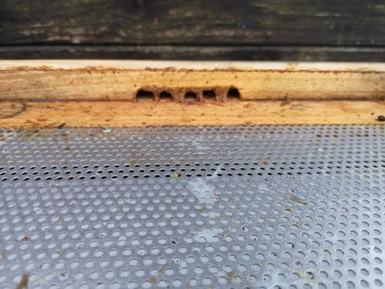 Bienenvolk macht sich Winterfertig