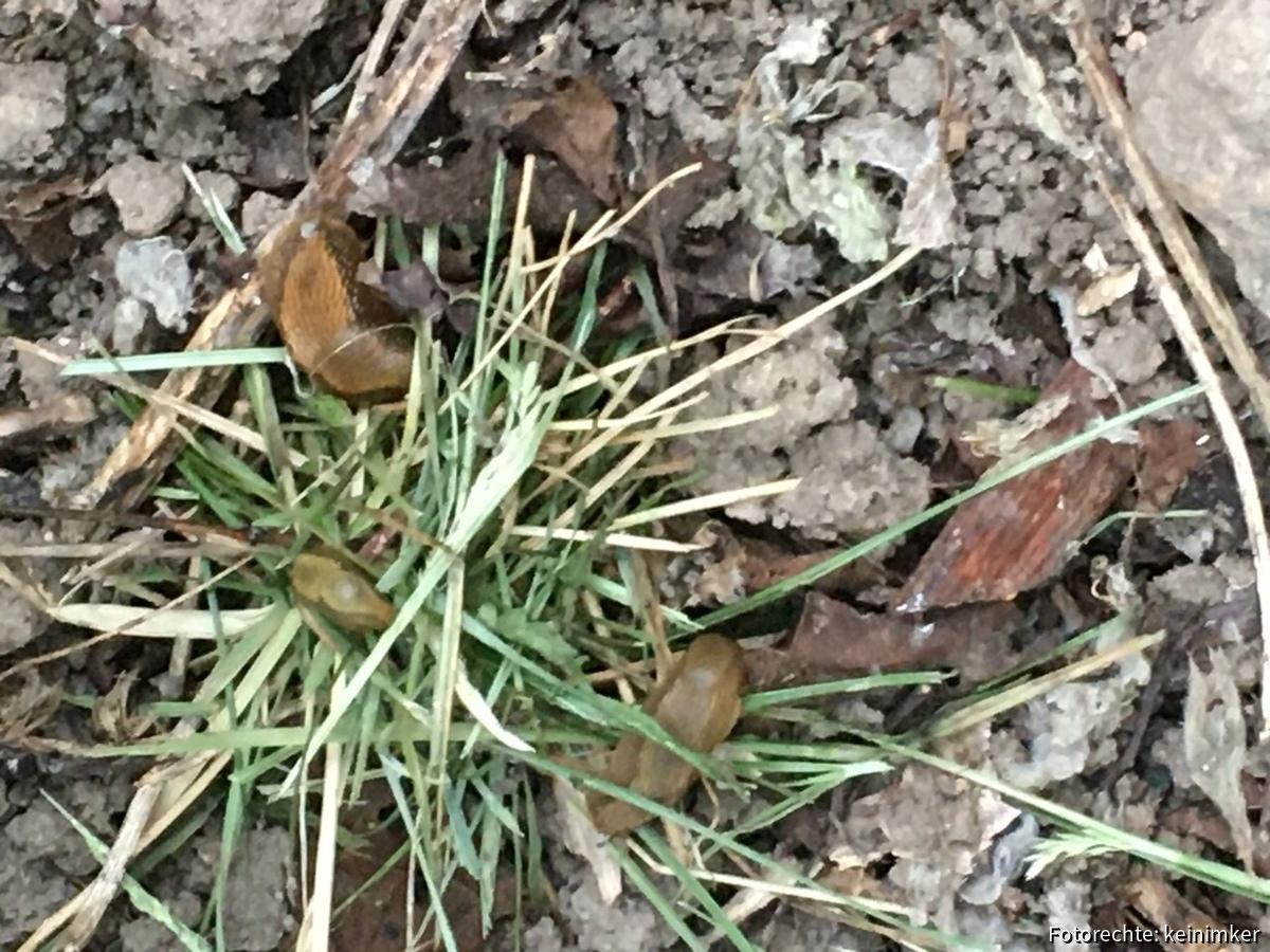 Nest einer Bunten Mauerbiene