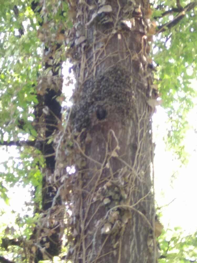 Baumhöhle neu bewohnt