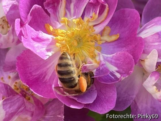 Blütengenuss_1