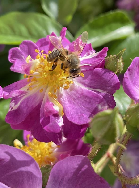Blütengenuss_2