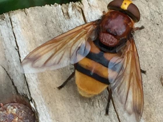 Kennt jemand das Insekt?