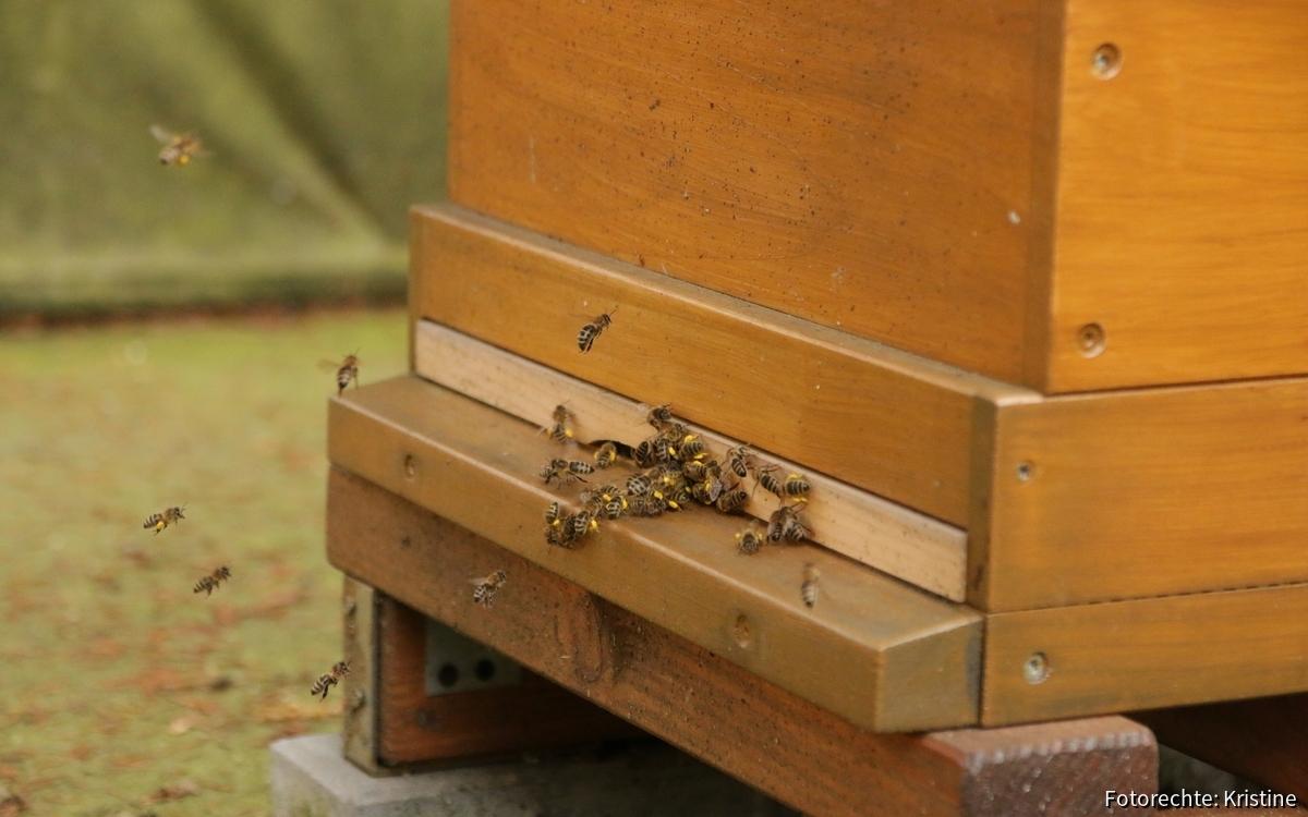 Pollenimport...