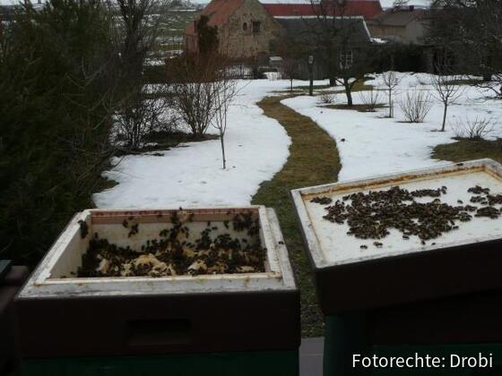 Halbzarge aufgesetztund 2kg festen Honig auf die Oberträger