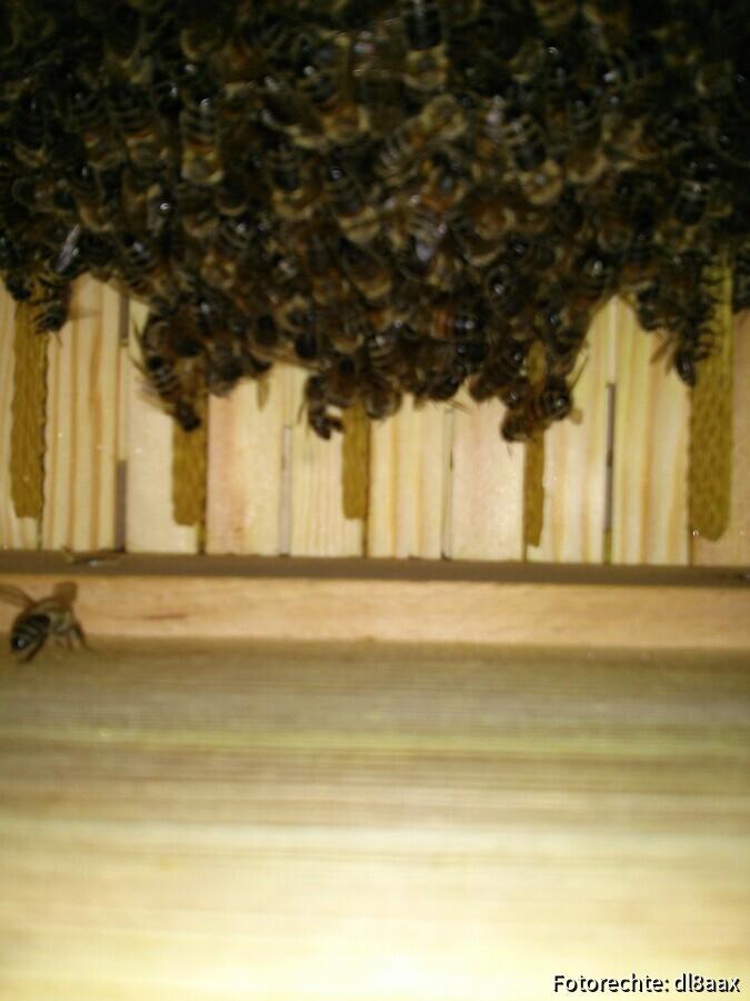 Bienenkiste innen