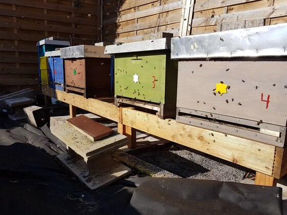 Mein Bienenstand am 18 Feb