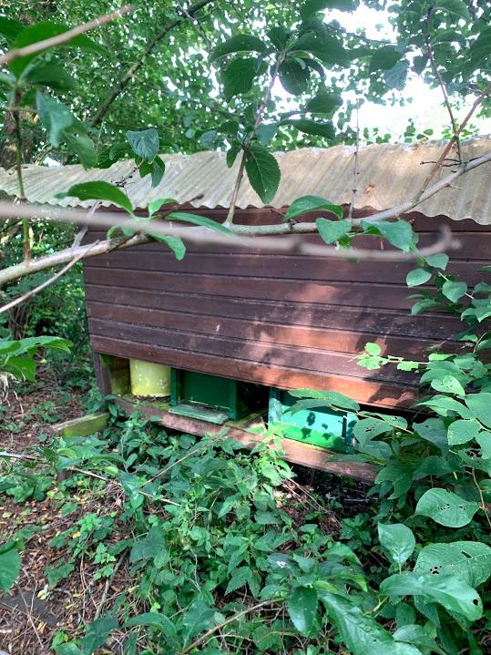 Bienenstand Streuobstwiese