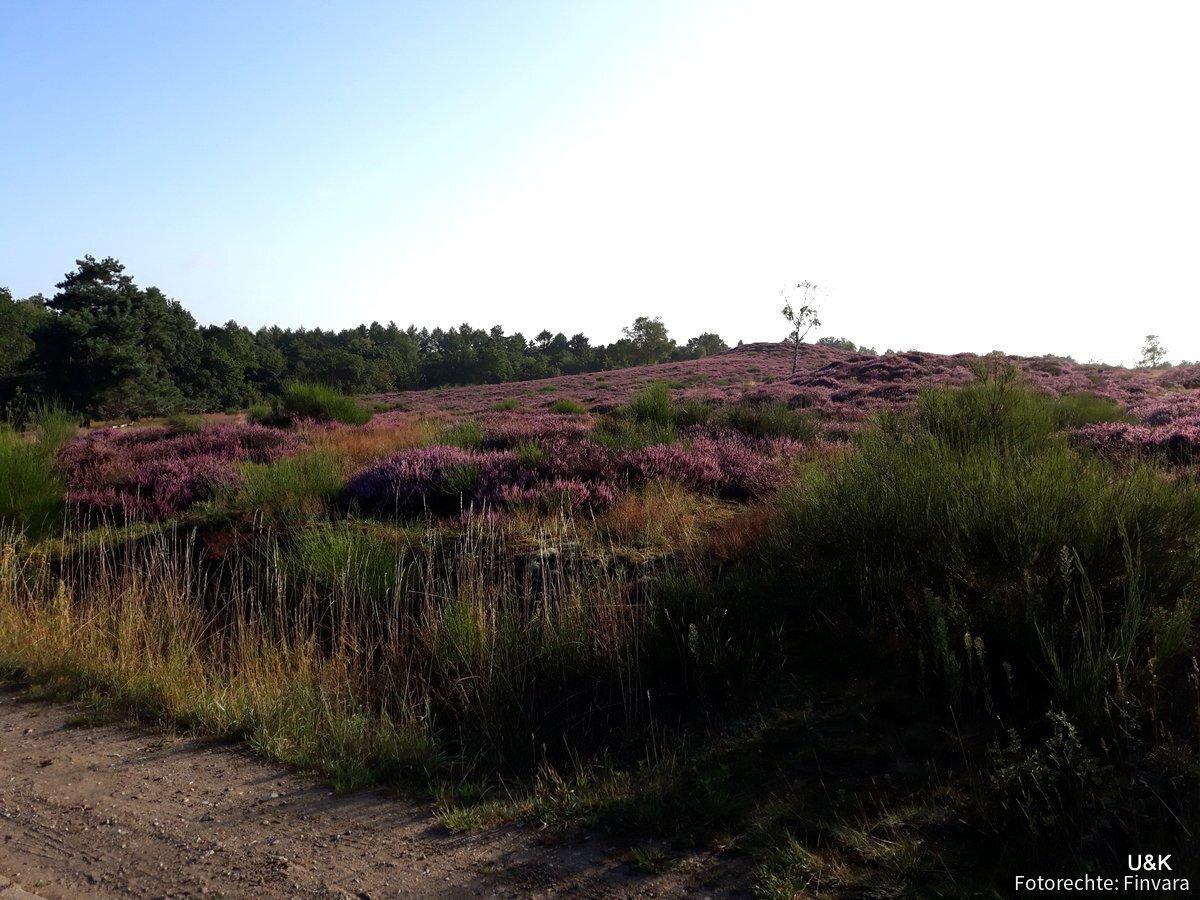 ... und wieder blüht die Heide über den alten Hügelgräbern ...