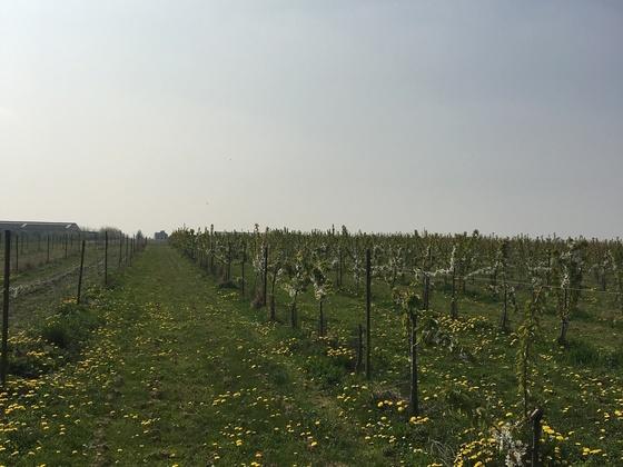 Obstplantage in Belgien