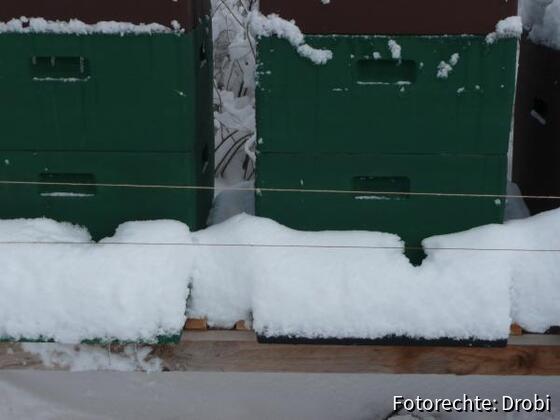Wollefäden vor den Fluglöchern halten die Meisen fern 17.2.09