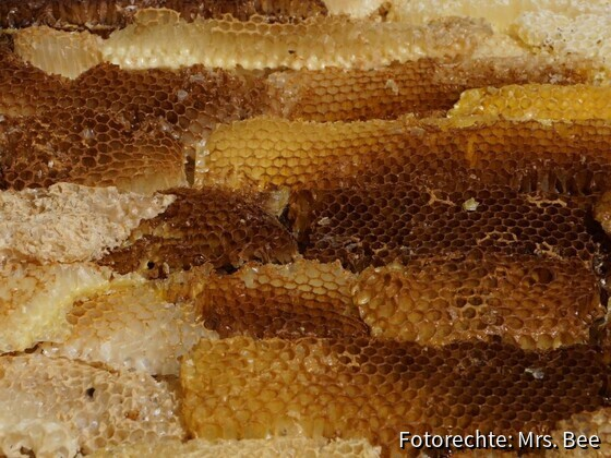 Bienenwaben-in-Keilrahmen-2018-Bild-02