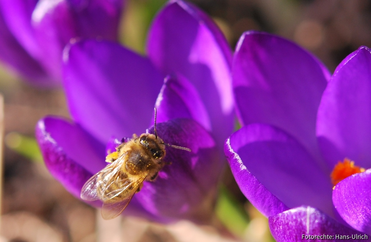 Pollen Pollen Pollen