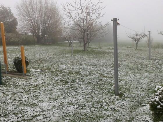 Heute früh 14.04.19 die Bienenbäume habe scheinbar keinen Schaden genommen