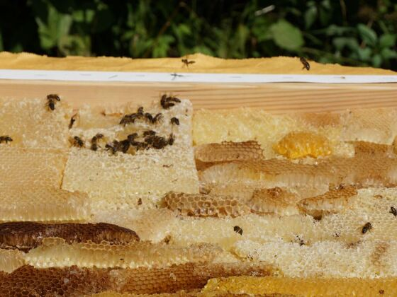 Bienenwaben-in-Keilrahmen-2018-Bild-03
