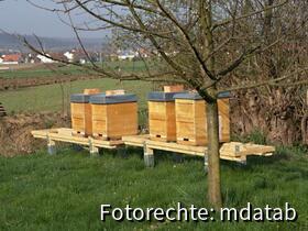 Bienenstand nach dem Umbau. Paletten weg, dafür Balken auf Bodeneinschlaghülsen.