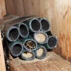 Mauerbienen im Schlauchbündel