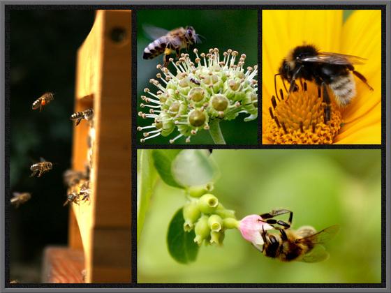 Collage_Bienen1