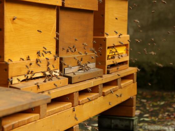 Bienenflug Ende Oktober 2017