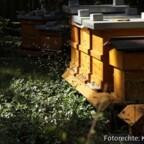 Flugbetrieb unserer Bienen am 05.04.2020 in Berlin