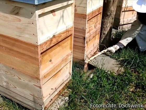 Arbeit an den Bienenvölkern