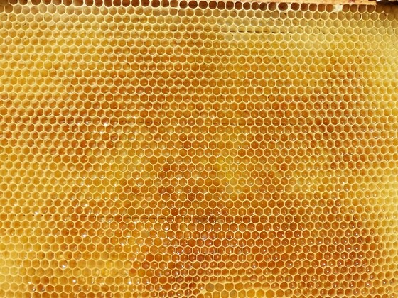4 Sorten Honig auf einer Wabe 2017