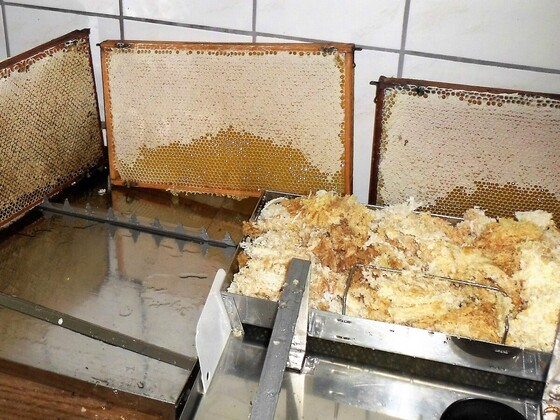 Honigernte im Schleuderraum