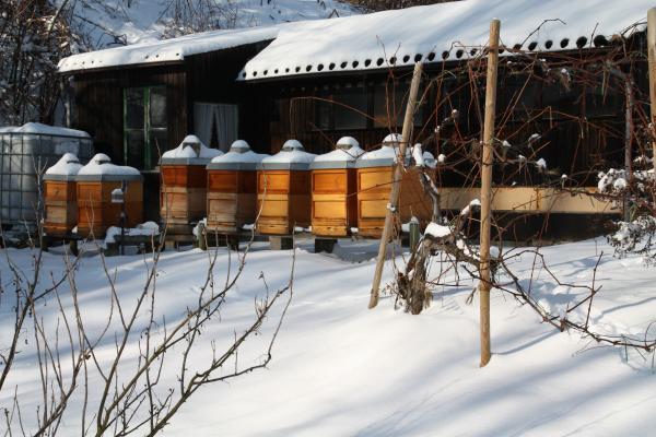 Bienenstand am 15.02.2009