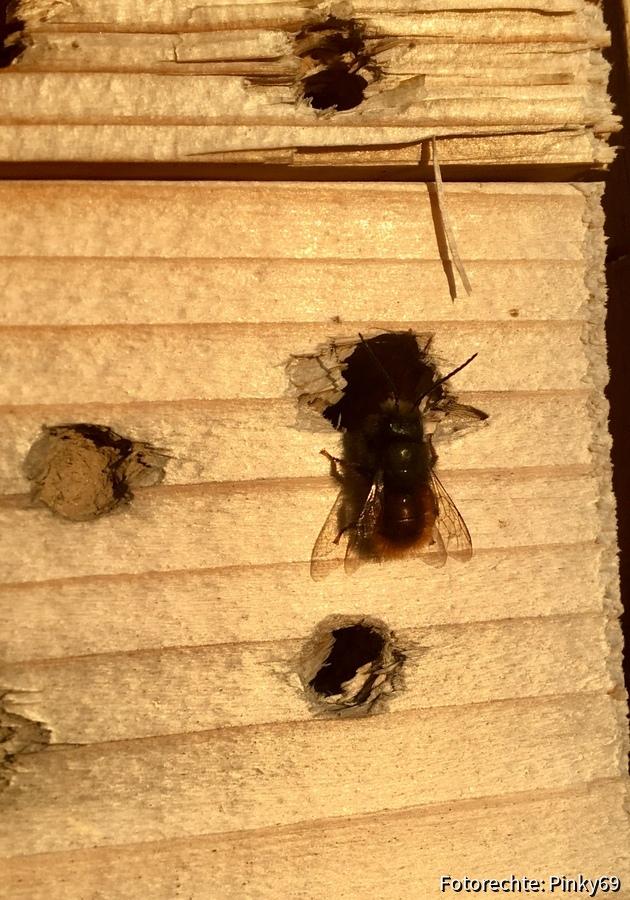 erste Wildbienen
