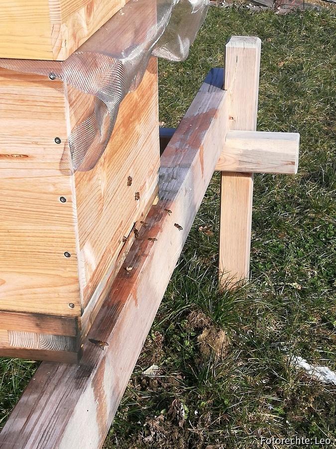 Endlich wieder Bienenflug