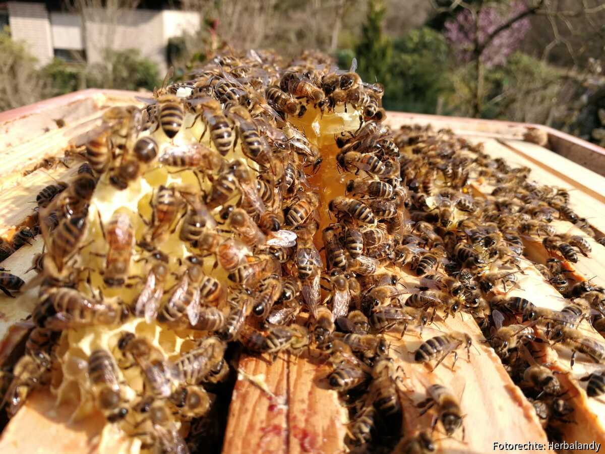 Kein Honigraum 1