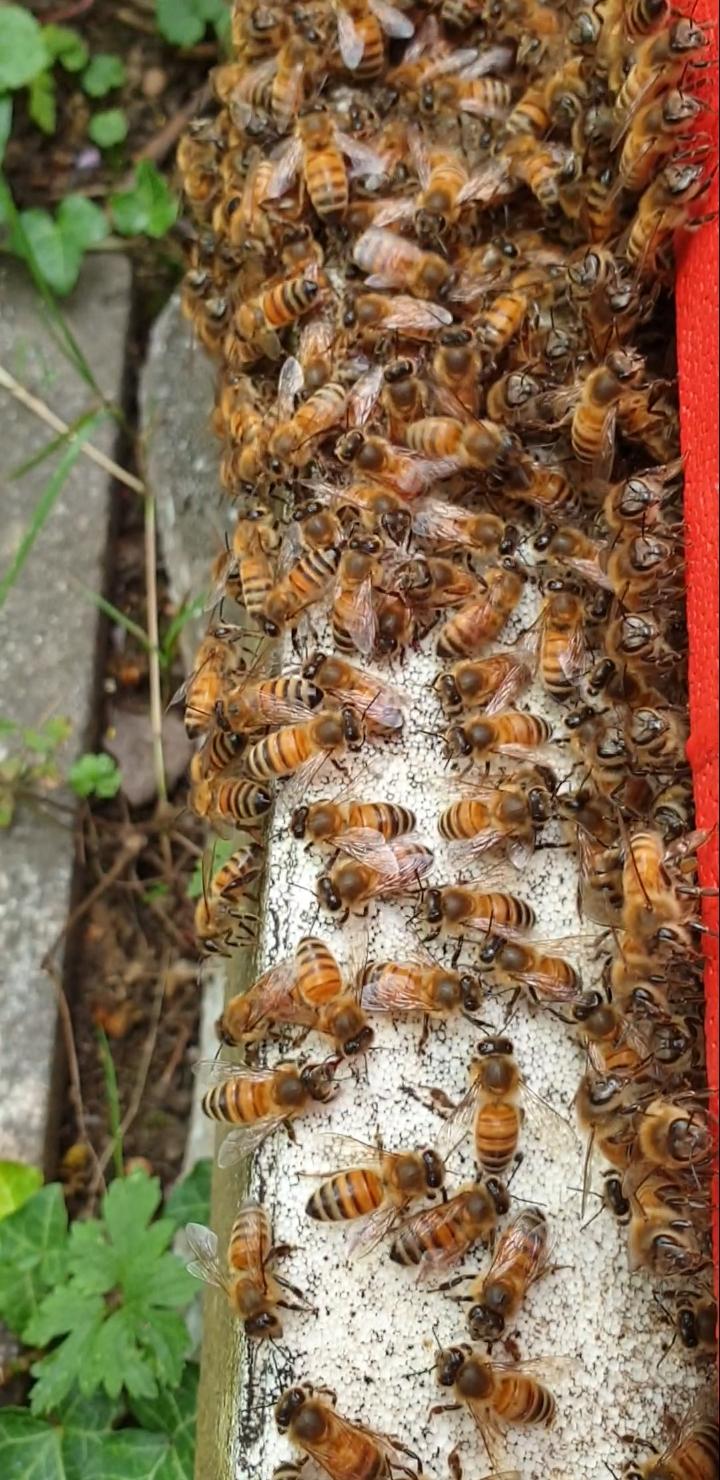 Flugloch belegt, da haben Wespen keine Chance