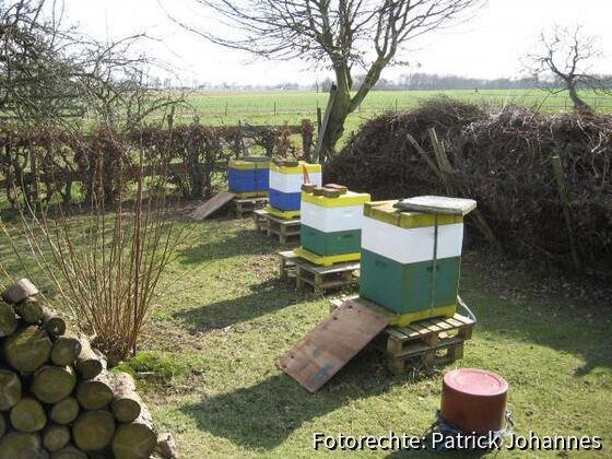 Der Bienenstand im Sonnenschein