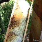 Naturbau im Honigraum, nicht ganz fertig.