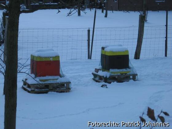 Bienenvölker im Schnee (`09)