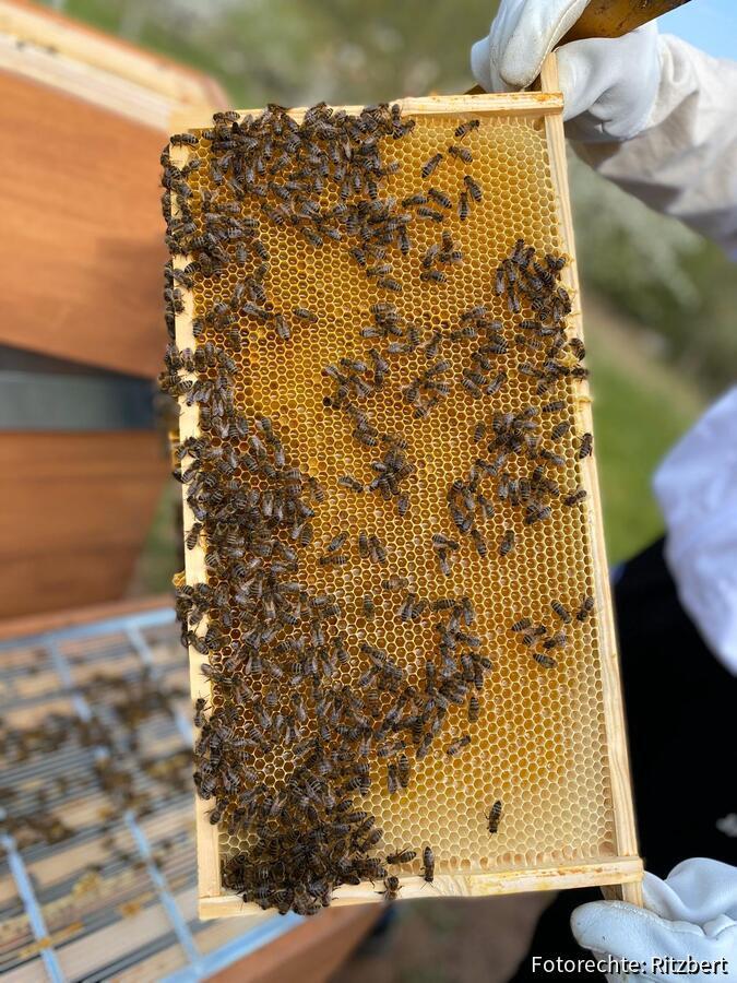 Erster Honig 2020
