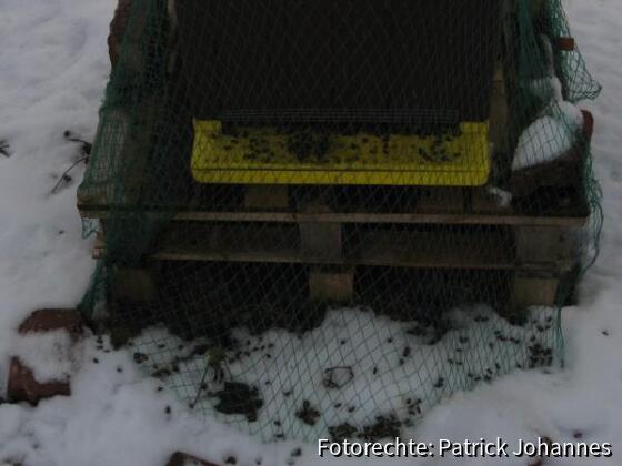 Tote Bienen im Schnee      ( 12.01.`09)