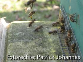 Es wird Pollen geflogen was die Flügel hergeben...und dann nichts wie ab nach Hause.